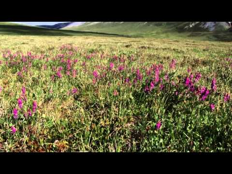 Dalton Discoveries: Arctic Plants