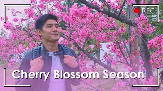 CHERRY BLOSSOM EXPERIENCE! Where to go in Japan | Robi Domingo