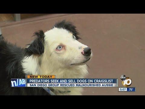 San Diego Craigslist Pets - petfinder