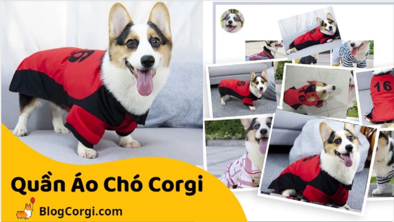 #11 💖Áo Quần Cho Chó Corgi, Poodle, Pug🐹 [BlogCorgi.com]   Thông Tin về áo quần cho chó