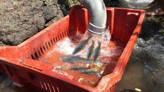 Increíble Inteligente Trampa Para Peces, Asombrosa Pesca