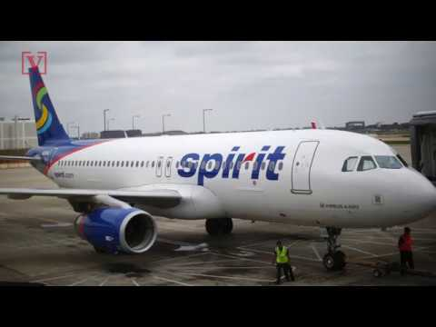 Student Claims Spirit Airlines Told Her to Flush Her Emotional Support Hamster Down Toilet