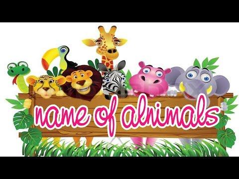 Name of animals -  học tên các loại động vật bằng tiếng anh vui nhộn