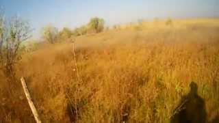 Охота на фазана в Ставропольском крае видео