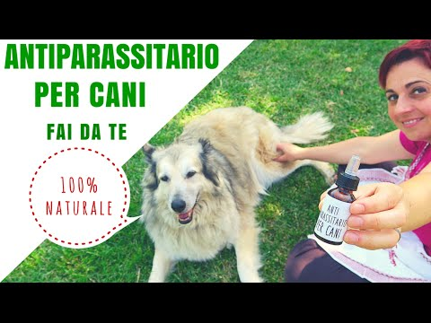Antiparassitario per cani 100 naturale fai da te youtube for Impermeabile per cani fai da te