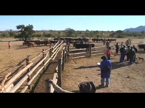 Animal Health and Production - Zimbabwe