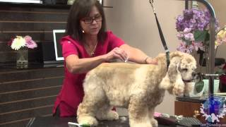 Everyday Salon Styles: The Pet American Cocker In A 'suburban Trim' With Kathy Rose