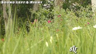 Download Lagu Sholawat Ansyadtukum Nasyidal Islami mp3