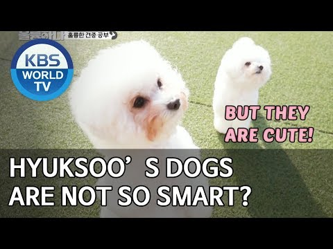 Hyuksoo's dogs are not so smart? [Dogs are incredible/ENG/2020.03.10]
