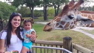 Funny Kids and Animals at the Zoo  Funny Kids Fails Vines 2019