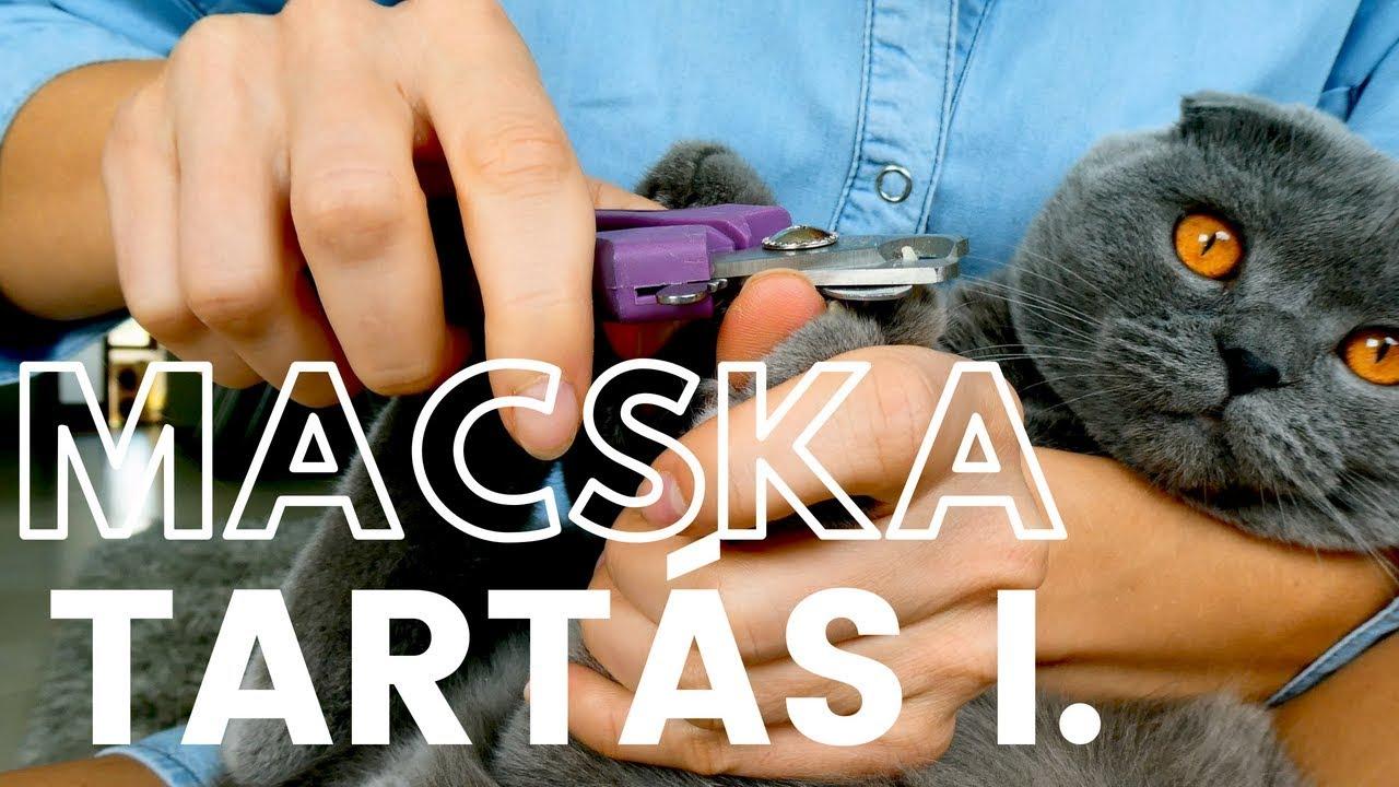 tabletták férgek számára, melyik macska jobb)
