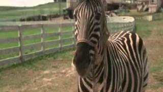 From the Movie Racing Stripes (2005) - Loved this scene when I was ...