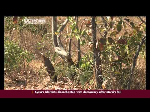Going green to protect Zimbabwe's forests