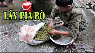 YÊN BÁI TV   Cận Cảnh Lấy Pịa Bò Và Tiết Canh Kinh Dị Trong Cỗ Phụ Đám Cưới Người Thái Đen ( P2 )
