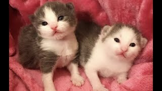Live: Newborn Kittens Meowing and Playing | The Dodo Live