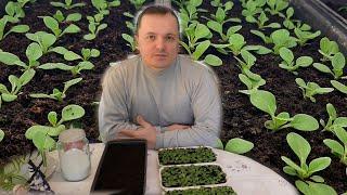 Хотите вырастить красивую рассаду петунии? Повторяйте за нами.