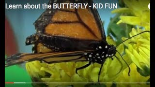 Learn about the BUTTERFLY - Draw & Color BUTTERFLY