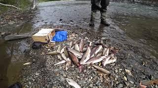 Рыбалка на хариуса и ленка в сентябре 2019. Кальжир. Казахстан.