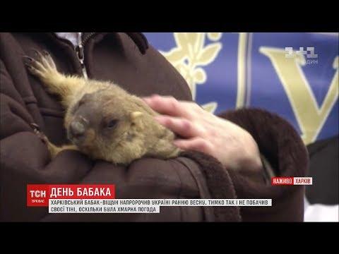 Харківський бабак-віщун напророчив Україні ранню весну