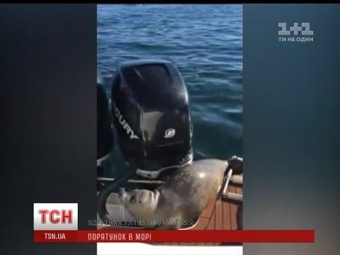 как тюлень залез в лодку