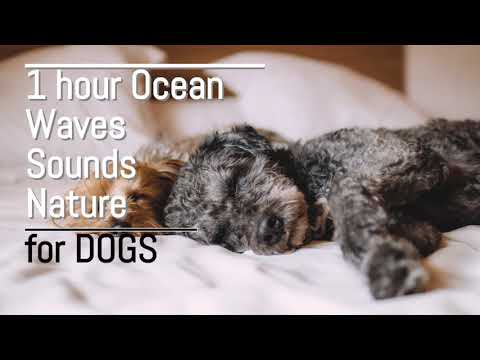 1 hour Ocean Waves Sounds Nature for DOGS