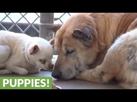 Elderly dogs abandoned at shelter find new home together