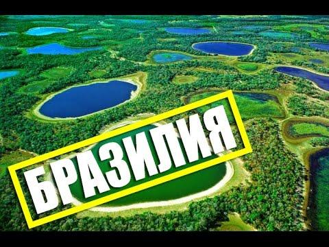 Дикая Бразилия (онлайн документальные фильмы смотреть