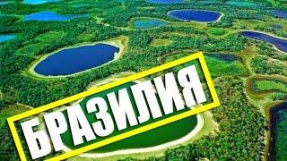 Самое большое болото в мире - Пантанал| БРАЗИЛИЯ