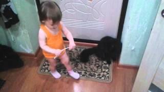 Игры с котами