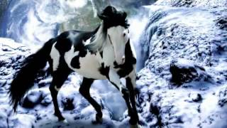 The most beautiful Horses in the world!   YouTube