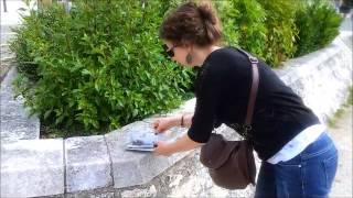 Carnet de Découverte du Marais poitevin (Coulon et les bords de sèvre)