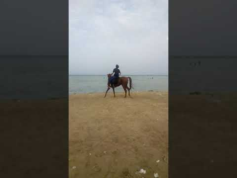 beach horse riding Jeddah ksa