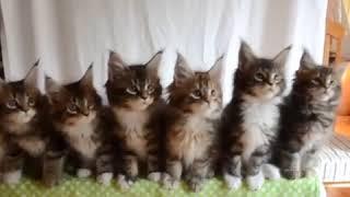 смешные котята прикол