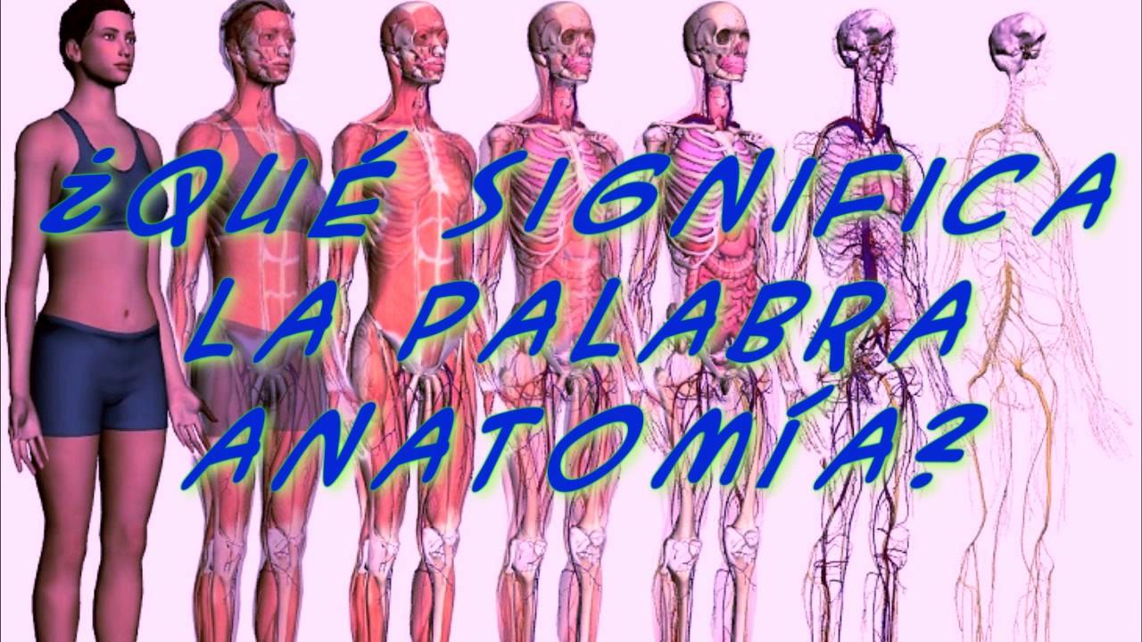 Qué Significa La Palabra Anatomía? - YouTube