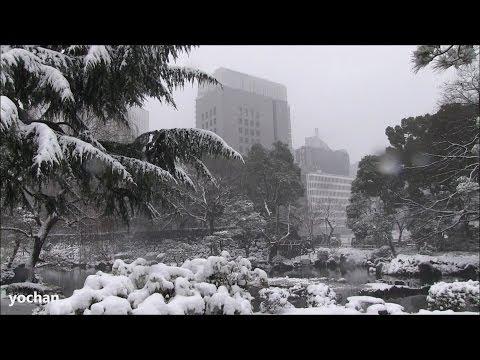 Heavy snow! at Hibiya Park (central area TOKYO) 2/8/2014  東京の記録的な大雪・日比谷公園 2014年2月8日