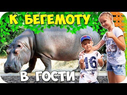 🌺 Едем в ГОСТИ К БЕГЕМОТУ 🌺 Большереченский ЗООПАРК 🌺 Лучший зоопарк для детей 🌺