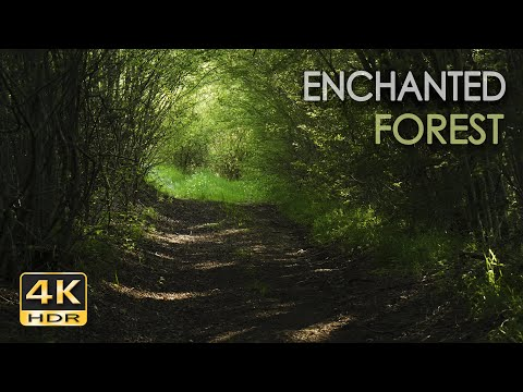 4K HDR Enchanted Forest - Blackbird Singing - Springtime Bird Song - Relaxing Nature Video & Sounds