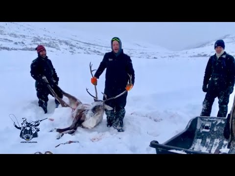 Christmas Reindeer Hunt | Caribou Hunting Alaska In The Wintertime