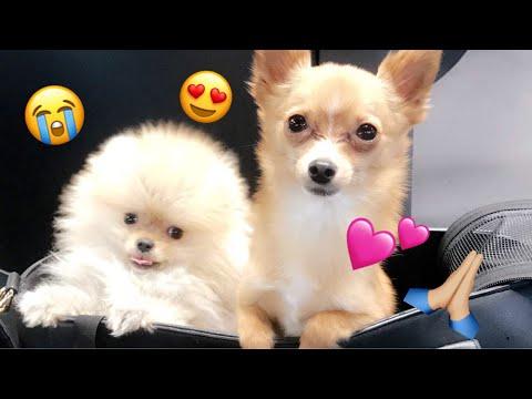 Meet My New $10,000 Puppy