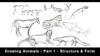 Drawing Animals for Beginners  - Part 1 - Structure & Form screenshot 2