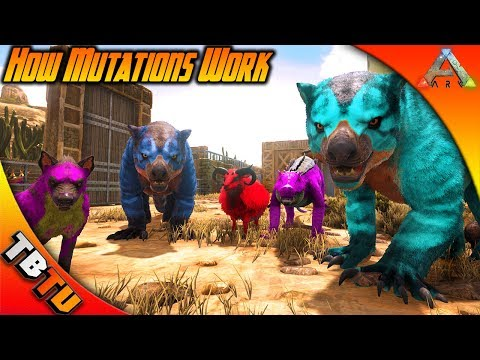 HOW MUTATIONS WORK IN ARK! STACKING COLOR AND STAT MUTATIONS! Ark Survival BREEDING Tutorial E1