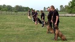Vorstellung Hundesportverein