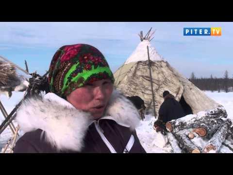 Чум, олени и тундра: Piter.TV рассказывает, как живут ненцы