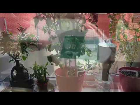 Easy Grow Automatic Plant Watering System