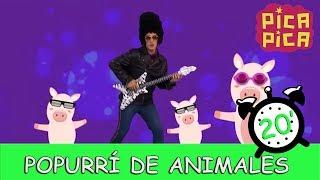 Pica - Pica - Popurri de Animales (20 minutos)