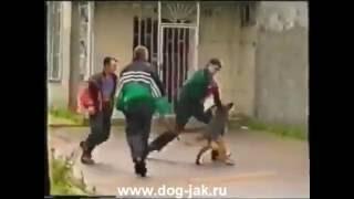 Проверка собак В.Носовым или что делать если напала собака(Школа Носова (Архив 90-х) Гостиница для собак Дрессировка с передержкой http://www.dog-jak.ru., 2016-05-19T18:54:55.000Z)