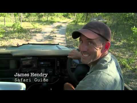 Live Stream: Safari in Djuma South Africa Kruger Nation Park 4/11/2016