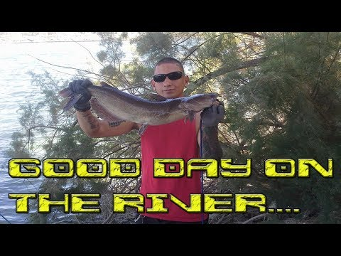 Monster channel catfish caught with stink bait'' Colorado River AZ from YouTube · High Definition · Duration:  40 seconds  · 901 views · uploaded on 8/26/2014 · uploaded by MR-FLIP