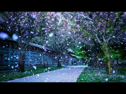 Karaoke | Mùa Xuân Lá Khô | Tone Nam  | Karaoke Nhạc Sống Anh Kiệt