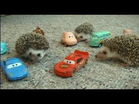 adorable baby hedgehogs playing with toys - Cute baby hedgehogs | Baby TV